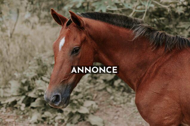 Vigtigt for din hests sundhed, at den får naturlige godbidder